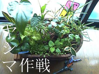 yashimasakusen1.01.jpg